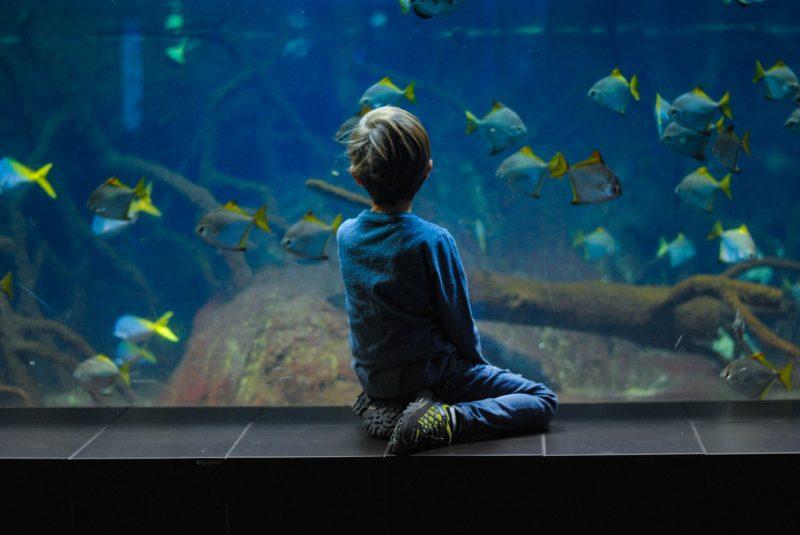 Benarkah ikan hias dapat menghilangkan stres?